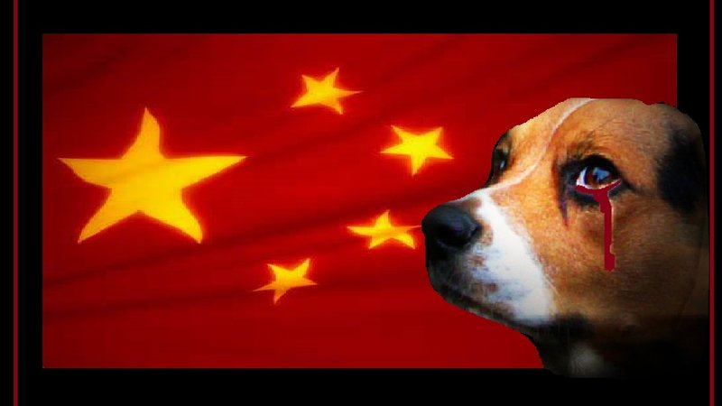 Please sign here to help stop the cruel Dig eating event held in China - https://www.change.org/p/president-of-the-people-s-republic-of-china-stop-the-yulin-dog-meat-eating-festival