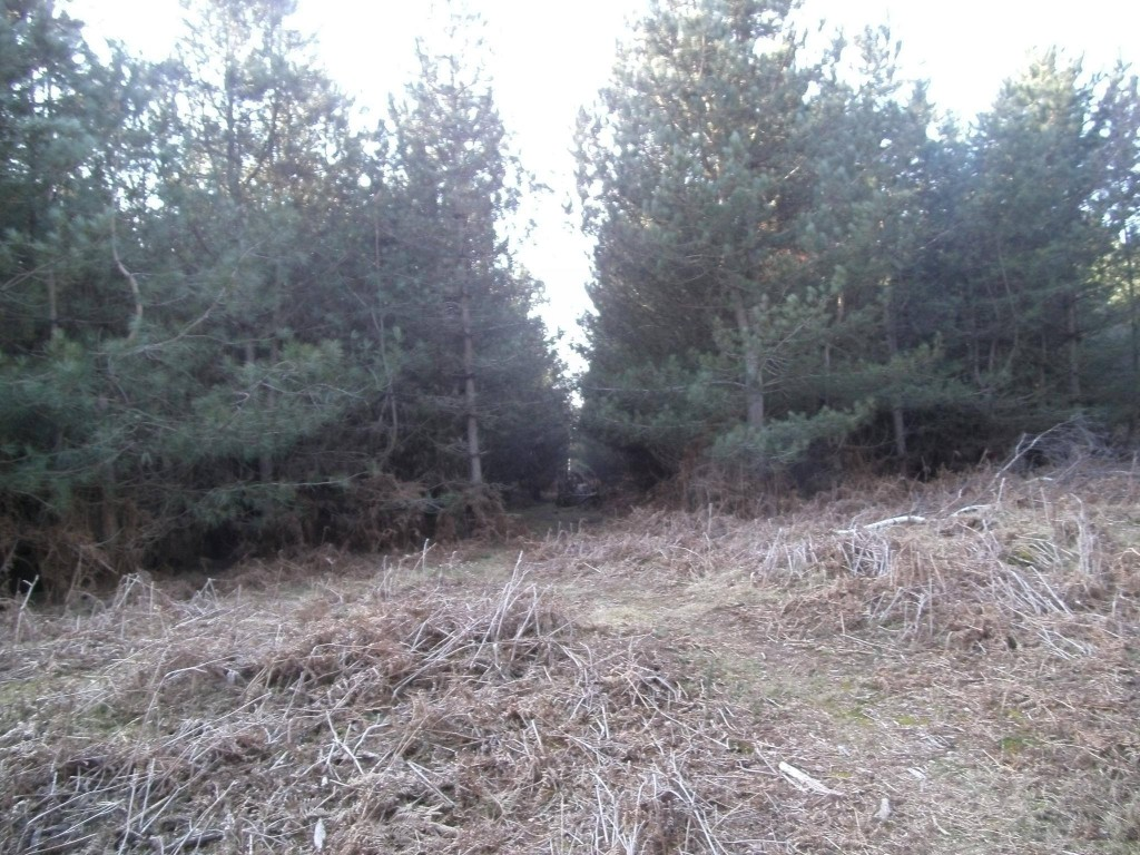 Rendlesham Forest - The TRUTH is coming?  (Photo courtesy of Brenda Butler and her team)
